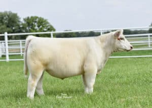 Focus Marketing Group   Your Complete Source for Livestock Marketing   At Focus Marketing, Our Focus is YOU